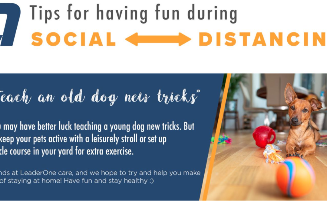 Social Distancing Fun – Teach Your Dog Some New Tricks!